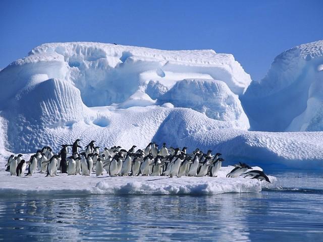 Antartic Treaty
