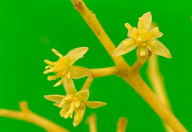 First Flowering Plants On Earth - 165 Million Years Ago
