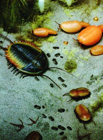 Cambrian Life