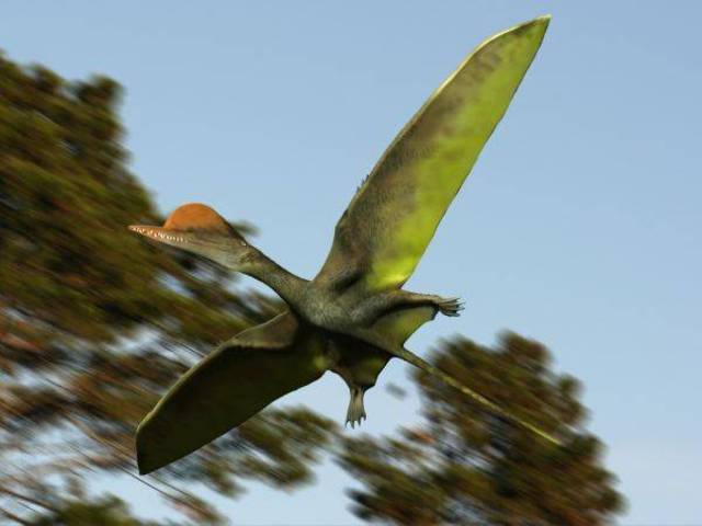 First Birds Take Flight