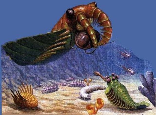 Cambrian Period (542 to 488.3 mya)