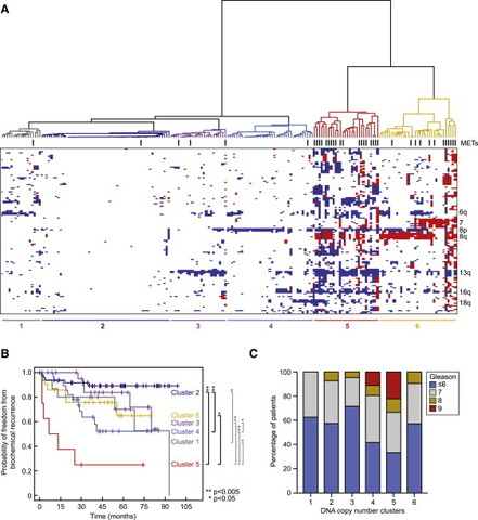 Genomic Characterization of Human Prostate Cancers