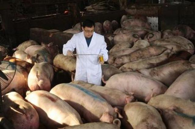 Tainted pork makes 70 ill