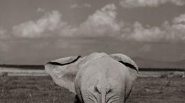 Animal Poaching timeline