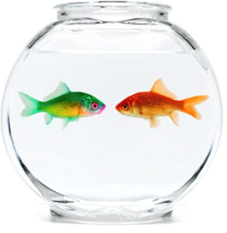 Fishbowl Theory