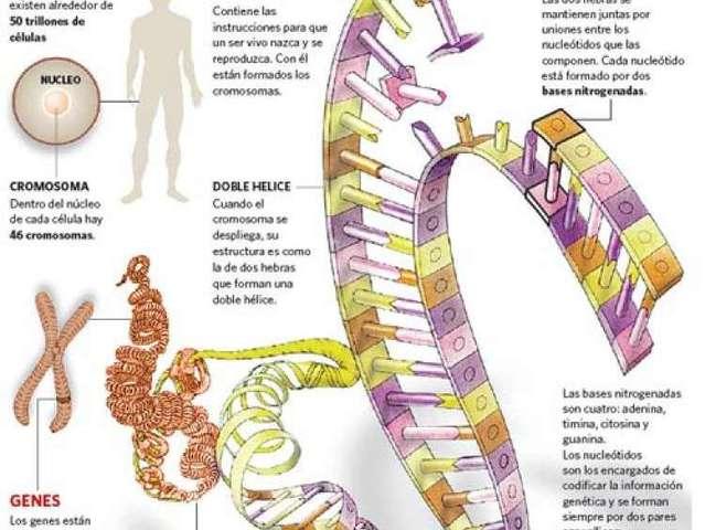 Descifrado del genoma humano