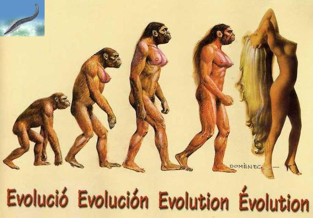 la evolucion del hombre
