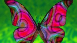 Metamorphosis of a Butterfly timeline