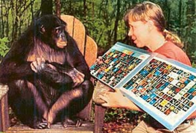 1986- Sue Savage-Rumbaugh publishes her research on the language acquisition of the Bonobo chimps Kanzi and Mulika 'Spontaneous Symbol Acquisition and Communication Use by Pygmy Chimpanzees' [Core study 13]