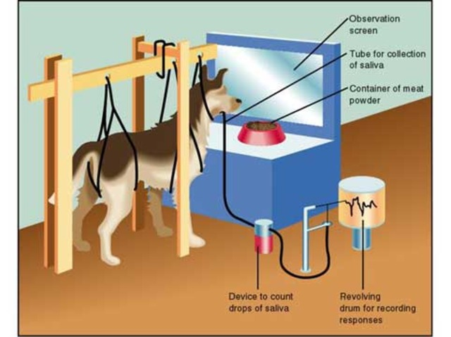 1906 - Ivan Pavlov publishes his findings on classical conditioning.(This is the start of BEHAVIOURISM)