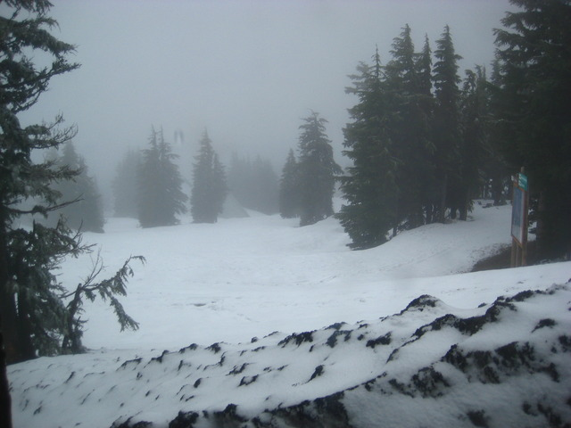 We played in the snow on Mt. Hood