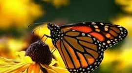 The Life Cycle of a Butterfly timeline