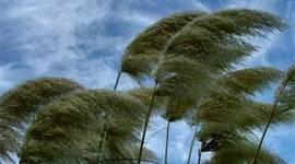 Wind Speed timeline