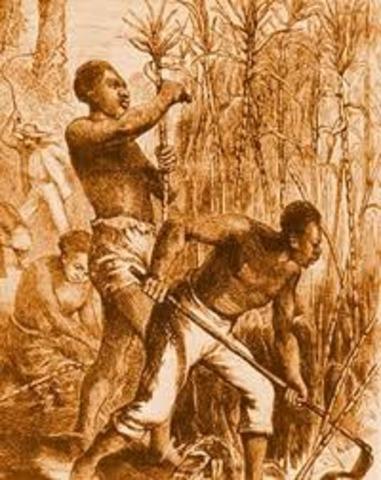 slaves attempt to murder