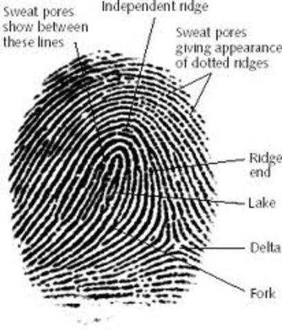 Forensic fingerprinting