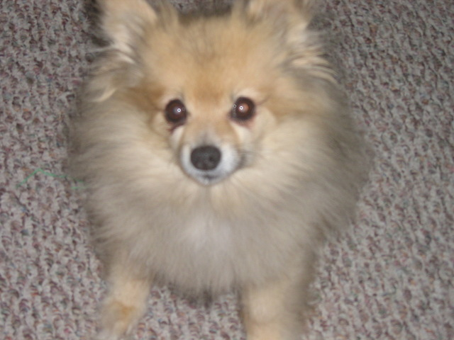 My Sister's Dog Coco Died