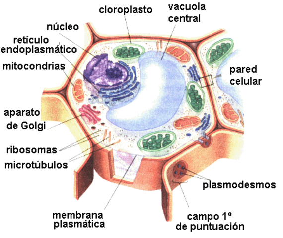Historia De La Microbiología Timeline Timetoast Timelines