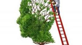 Climbing Up the Language Ladder timeline