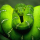 5355 animals hd wallpapers snake green