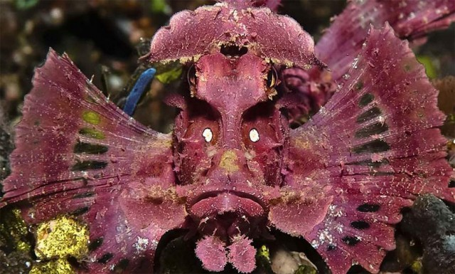 Underwater Snapshots