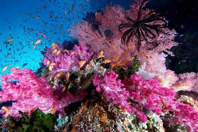 1st Underwater Movie