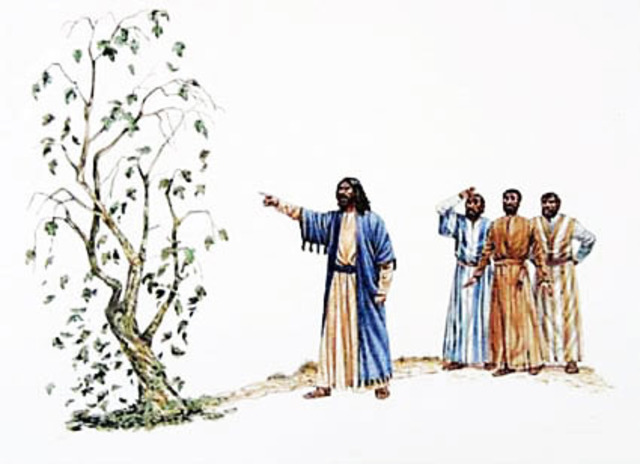 Jesus Returns to the Jerusalem Temple and Curses the Fig Tree
