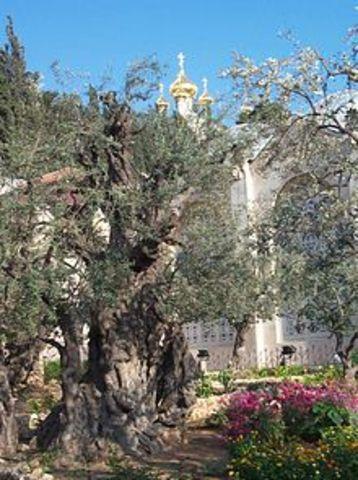 Gethsemane (Part 1)