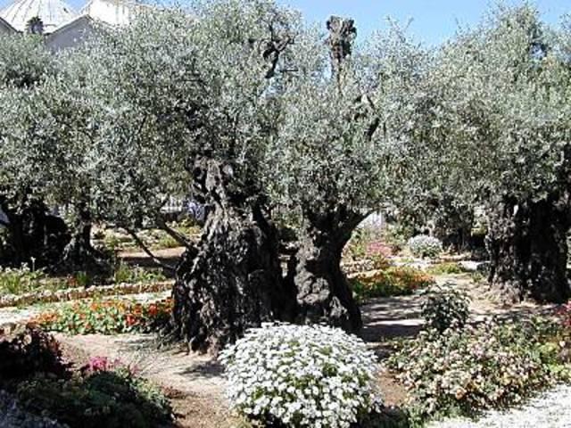 Gethsemane (Part 3)