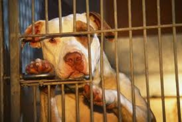 first breed ban against pit bulls