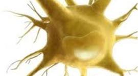 The History of Stem Cells timeline