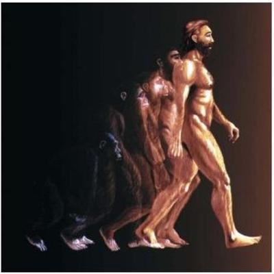 evolução humana timeline