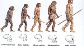 Evolução do Homem timeline