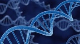 History of DNA BY: Seth Serrano timeline