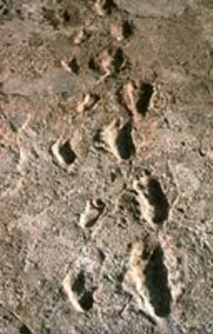 Mary found footprints