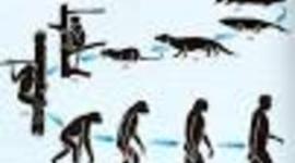 DESARROLLO DE LA TEORÍA DE LA EVOLUCIÓN. timeline