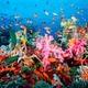 Coral reef near fiji 007