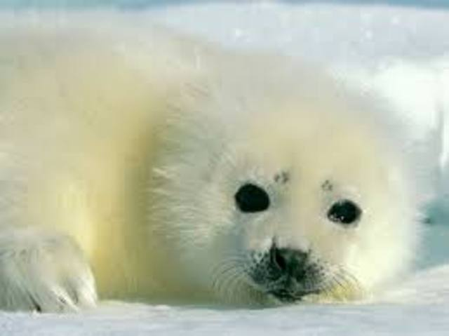 treaty on seal hunting sighned