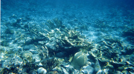 Underwater Photography timeline