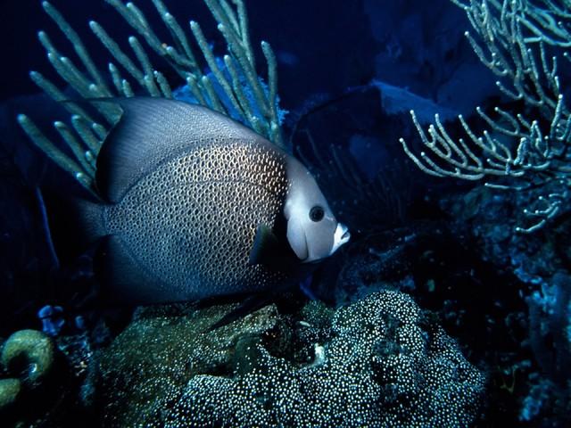 Рыбы самое красивое