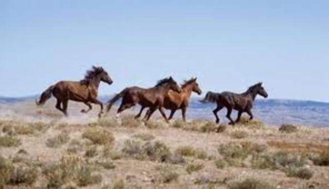 Wild and Free-Roaming Horses and Burro Act