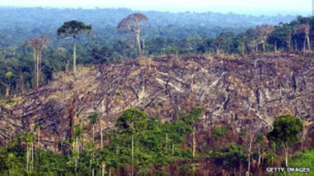 Noticia (Brasil: en aumento la deforestación de la Amazonía)