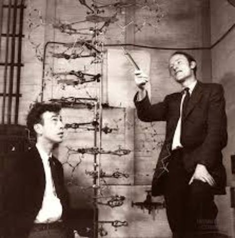 James Watson y Francis Crik