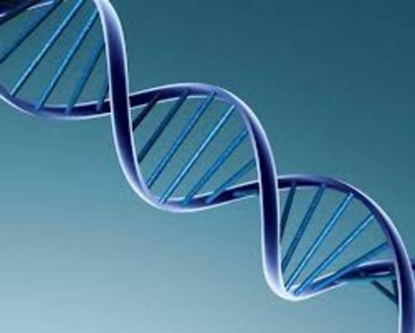 Se termina la secuencia completa del Genoma Humano