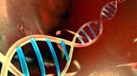 CRONOLOGIA DEL GENOMA timeline
