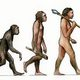 Consequences of evolution 631