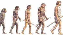 El origen de la especie humana timeline