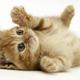 1562 cute little cat