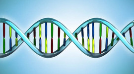 Genoma Humano timeline