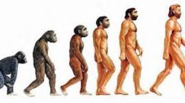 Evolucion humana  timeline