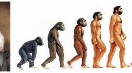 Eje cronológico sobre las especies timeline